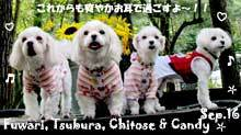fuwari_tsubura_chitose-092716-1.jpg