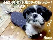 hana-052616.jpg