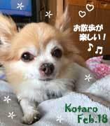 kotaro-022218-1.jpg