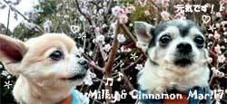 milky_cinnamon-030617.jpg