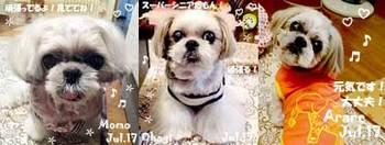 momo_ohagi_arare-073117.jpg