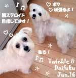 poko_maru-twinkle_daifuku-061216.jpg