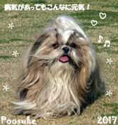 poosuke-123017-2.jpg