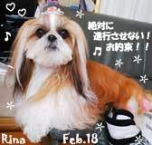 rina-021718.jpg