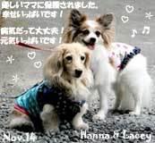 hanna-lacey-110214.jpg