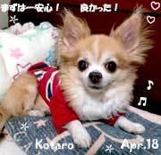 kotaro-041818-2.jpg