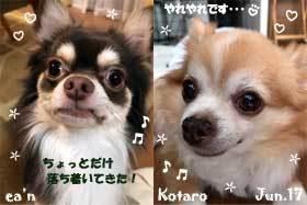 kotaro_ean-062817.jpg