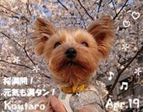 koutaro-040519-compressor.jpg