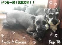 luca_cocoa-092718.jpg
