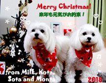 milk_kota_sota_monta-122518-compressor.jpg
