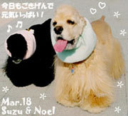 noel_suzu-033018.jpg