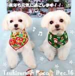 poco_tsukisumi-122516.jpg
