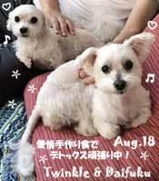poko_maru-twinkle_daifuku-082818.jpg